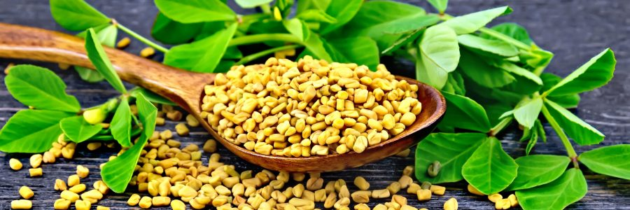 The Truth) Does Fenugreek Increase Testosterone Levels?